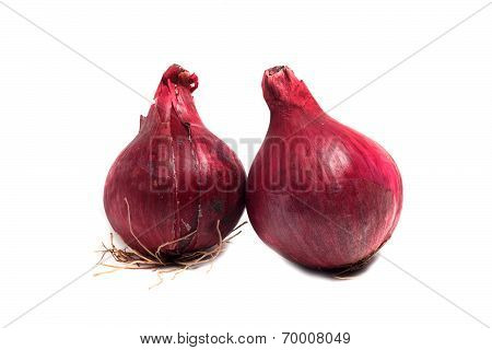 Two Large Red Onions