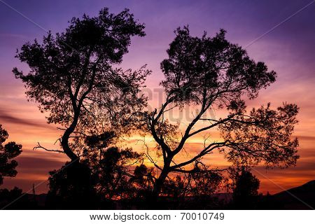 Silhouette Of Tree Lit At Sunset