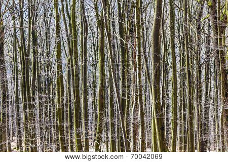 Autumn Forest With Trees Growing In A Row