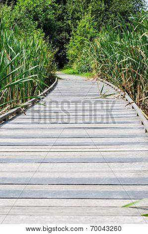 little bridge of wood