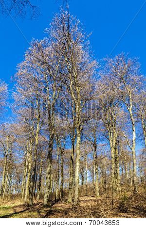 Beautiful Trees In The Forest