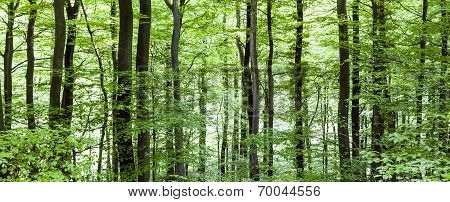Pattern Of Trees In Forest