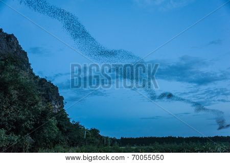 Bats out of the cave in Thailand