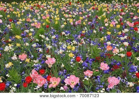 Picturesque Springlike Flowerbed Full Bloom