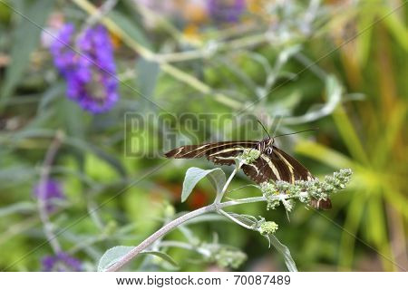 Butterfly, Brown, Looking At Camera