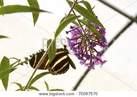 Silhouette Of Butterfly Feeding