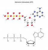 Structural chemical formula and model of adenosine triphosphate poster