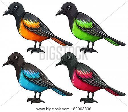 Illustration of a set of birds
