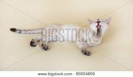 Thai kitten washes.