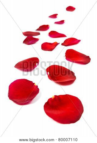 Red Rose Petals Isolated On White