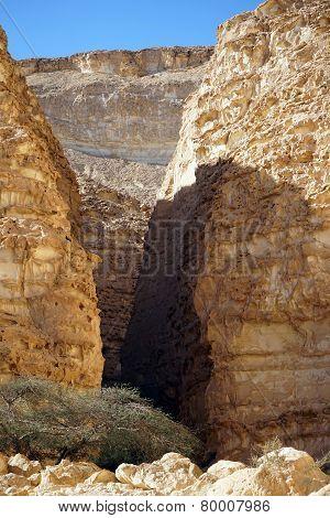 Acacia In Barak Canyon