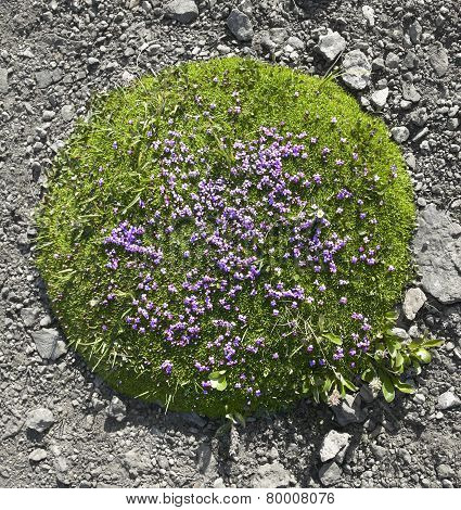 Piece Of Nature In The Rocks. Alberta. Canada