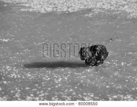 stone on the ice