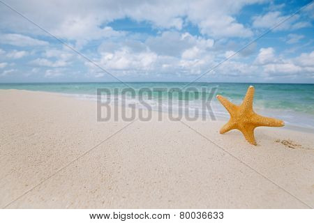 starfish on golden sand beach with waves in  soft  light, shallow dof