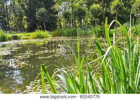 A picturesque pond in the green summer forest. A quiet pond, overgrown with weeds and tall grass. A small forest pond, the pond in the forest. poster