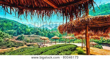 Tea Plantation In The Doi Ang Khang, Chiang Mai, Thailand