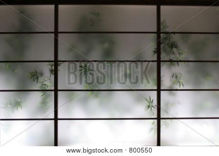 bamboo behind a wall screen