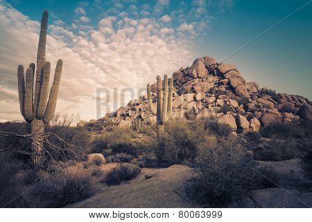 Desert landscape in Scottsdale, Phoenix, Arizona area - Image cross processed
