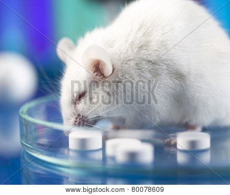 Workplace modern laboratory for molecular biology test on blue background