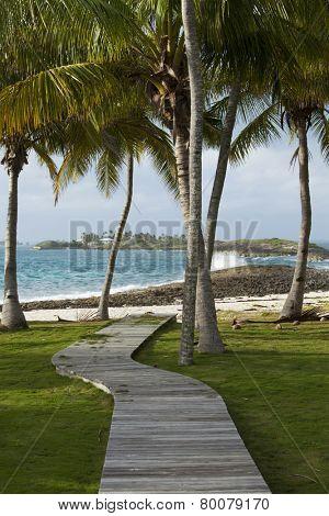 path to beach through palm trees, bahamas