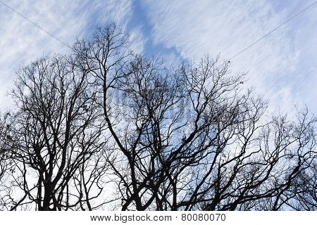 Tree Branches Blue Sky Silhouette
