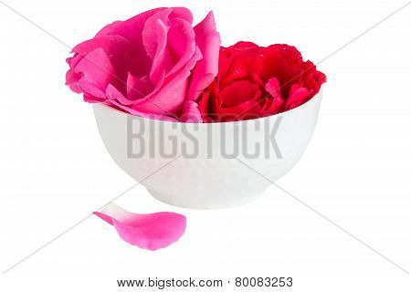 Inflorescences Roses In A White Cup
