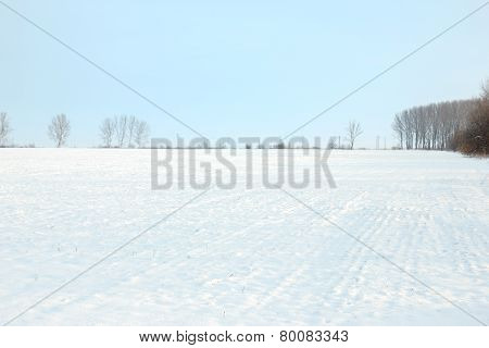 Beautiful Landscape Snow Area With Trees