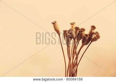 Dried flowers background