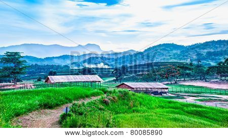 Landscape Of Tea Plantation On The Hill With Cottage