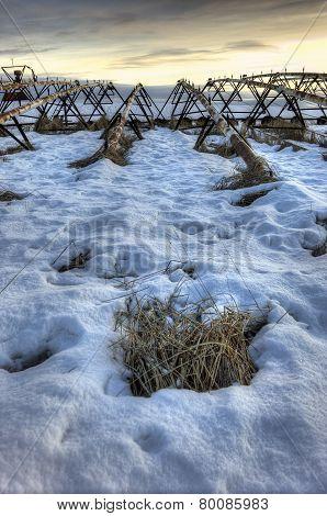 Field In Winter.