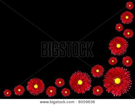 Group Of Red Flowers With Yellow Center Isolated On Black