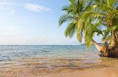 Deserted Boca del Drago beach on the archipelago Bocas del Toro, Panama poster