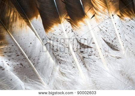 Native American Indian Feathers Detail
