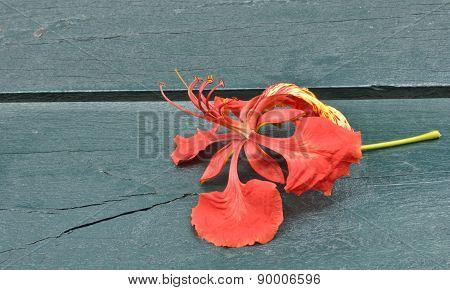 Red Flower On Table