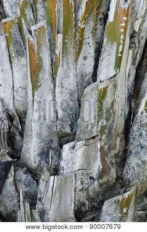 Bark Of Sugar Palm Tree