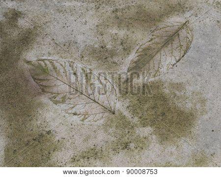 Leaf Mark