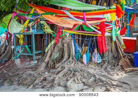 Conservation Tree By Tree Ordination,phi-phi Islands,thailand