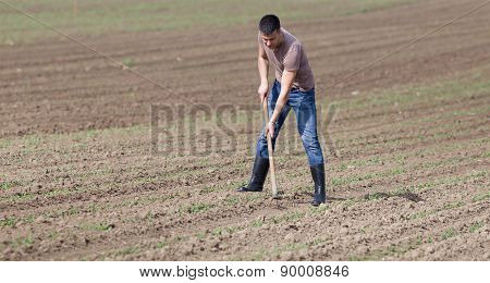 Farmer Hoeing Soil