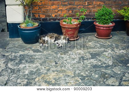 Tabby Cat Sleeping By Potted Plant Outside