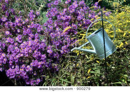 Metal Watering Bucket In Garden