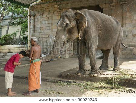 Elephant Blessing At The Mahalingeswarar Temple.