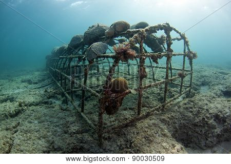 Artificial reefs in Ft. Lauderdale Florida are creating a buzz. They use solar panels to create a small electric charge that helps budding corals grow on submerged rebar. ** Note: Soft Focus at 100%, best at smaller sizes