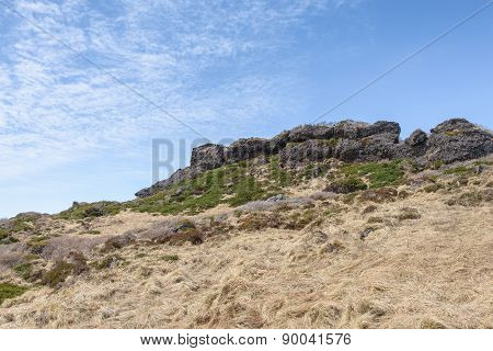 Plants And Rock At The Witset-oreum In Hallasan Mountain
