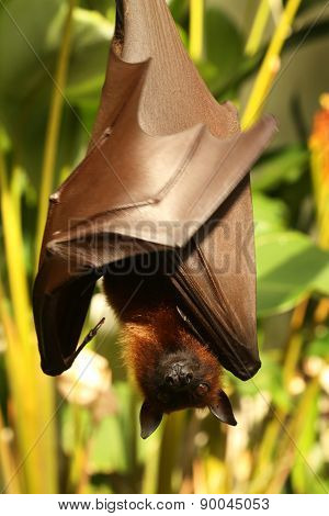 Bat hanging on the tree