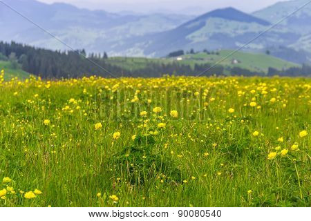 Yellow Flowers In The Mountains