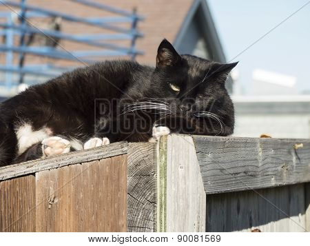 Lazy cat on houseboat dock