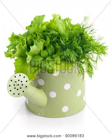 Bunch spicy herbs in watering can. Isolated on white background