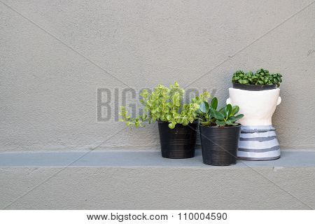 Plant In Vase On Grey Wall Decoration Concept