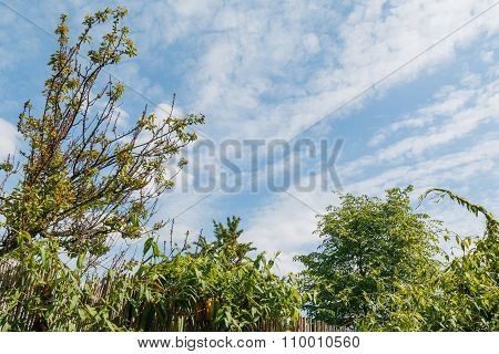 Close-up of green leaves and blue sky