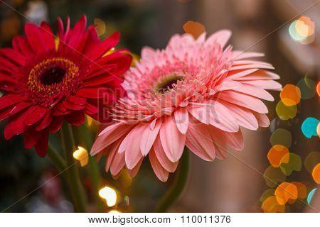 Gerbera Flowers With Blur Effect